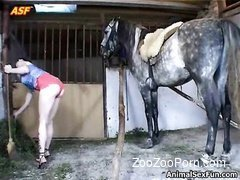 Two dark-haired sluts are sucking juicy cock of a horse